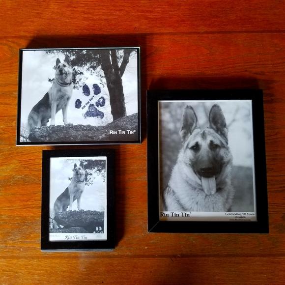 Rin Tin Tin framed prints.